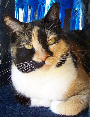Patches Lady, one of The Calico Girls