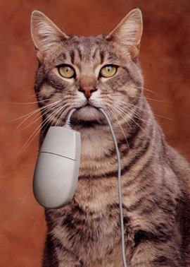 cat-and-mouse2.jpg