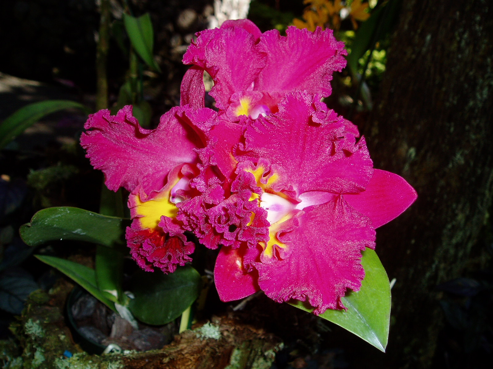 Pretty orchid in the Hawaii Tropical Botanical Garden