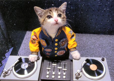 Hello. I'm DJ Kitty