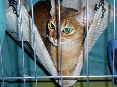 Hello. I'm an Abyssinian kitty.