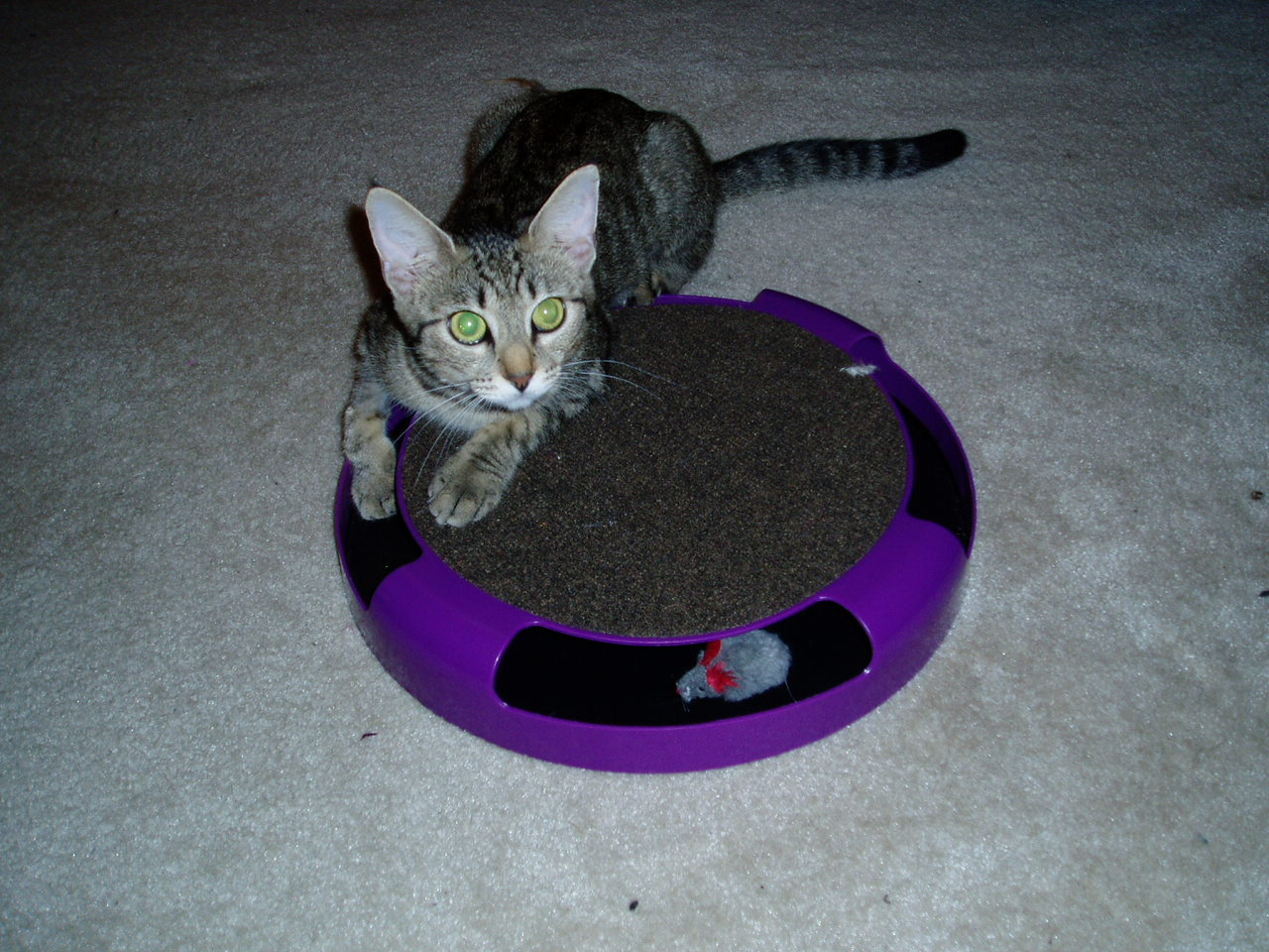 Little Ashley and the spinning mousie toy