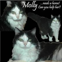 Molly needs a home